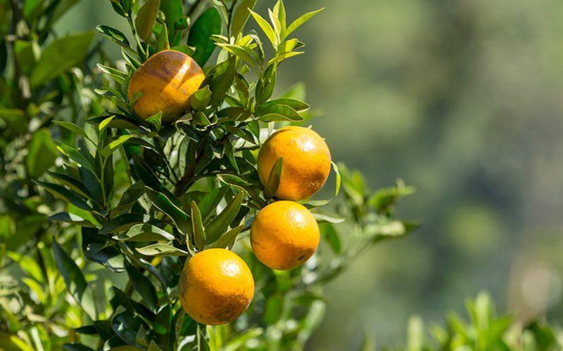 laranja-close
